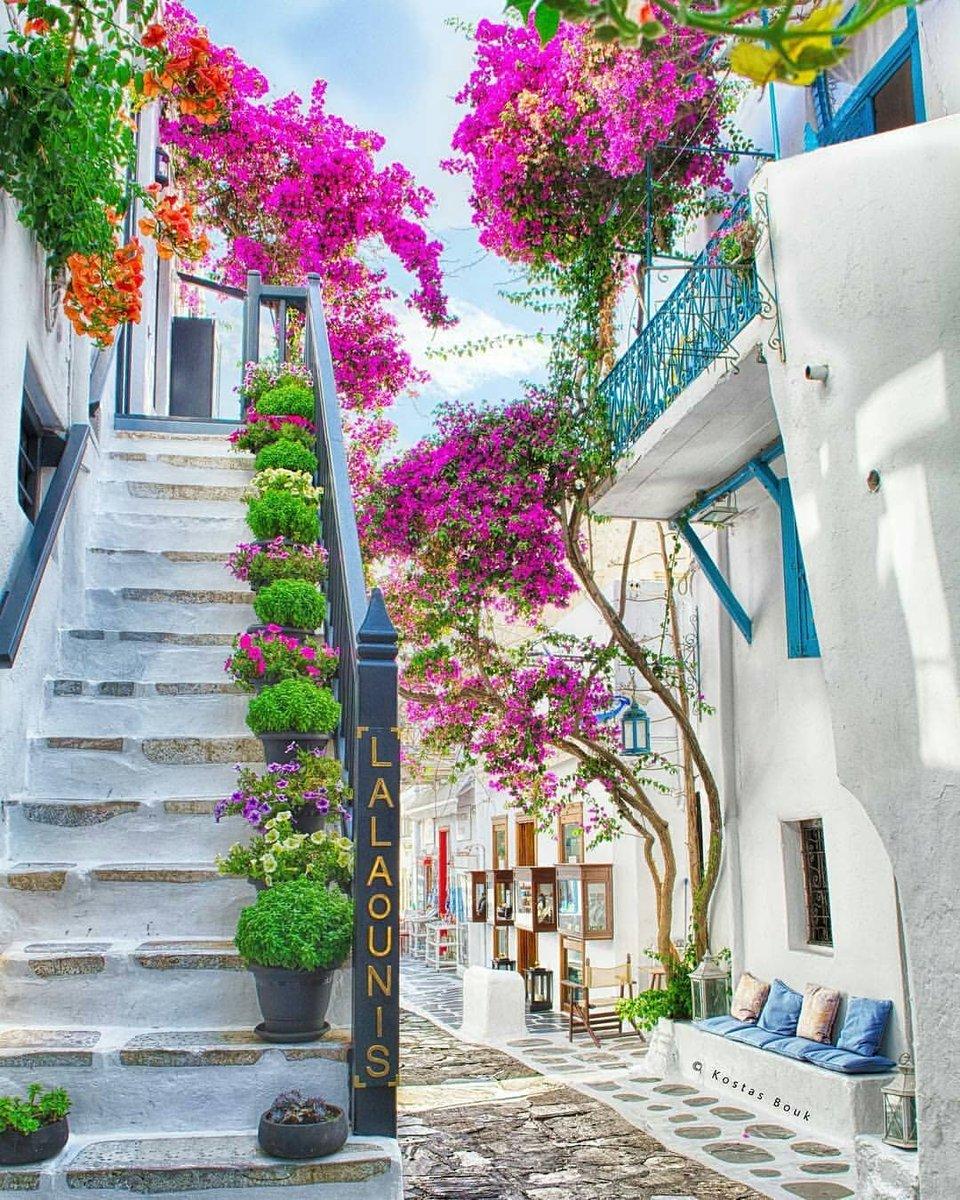 "pavlidis on Twitter: ""καλημέρα και καλή βδομάδα στην όμορφη γλυκιά παρέα...!!🙏🌊 ...Με χρώματα, μυρωδιές και εικόνες που ξεκουράζουν...🌹❤️ από τα πανέμορφα σοκάκια των Κυκλάδων...!!👍🕊️ ...Καλή συνέχεια.. σε όλους...!!😉❤️ ...Mykonos Island ..."